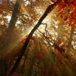 Autumn forest — Stock Photo #16333163