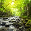 Mountain River in the wood — Stock Photo #16333199