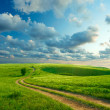 Summer landscape with green grass, road and clouds — Stock Photo #16333637