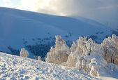 Vinterlandskap med snö täckt träd — Stockfoto
