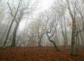 Forêt brumeuse — Photo