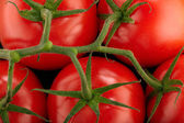 Red tomatoes branch — Stock Photo