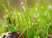 Herbe verte avec les gouttes d'eau. shallow dof — Photo