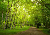 Green trees in the park — Stock Photo
