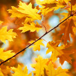 Autumn maple leaves background — Stok fotoğraf