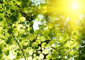 緑の葉の背景 — ストック写真