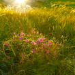 Spring flowers at sunset lights - Stok fotoğraf