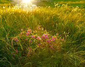 Spring flowers at sunset lights — Стоковое фото