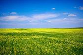 Hierba verde, flores de color amarillo y azul cielo — Foto de Stock
