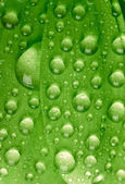 Green leaf with waredrops — Stock Photo
