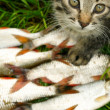 Cat and fish — Stock Photo