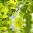 Green leaves reflecting in the water — Stock Photo #19570717
