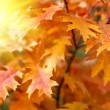 Foto Stock: Red autumn leaves background