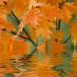 Red autumn leaves reflecting in the water — Stock Photo #19571909