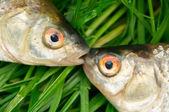 Pescar en hierba verde — Foto de Stock