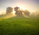 Foggy meadow at sunrise — Stock Photo