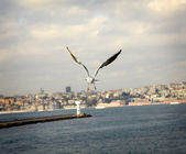 Flying seagull over bosphorus — Stock Photo
