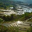Rice terraces. Yunnan, China. — Stock Photo #25335643