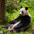 Giant panda eating bamboo — Stock Photo #26417557