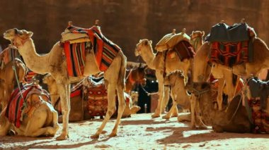 Camel caravan in the desert — Stock Video