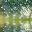 Water drops on fir tree reflected in the water — Stock Photo #42037287