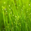 Green grass with waterdrops — Stock Photo #42037301