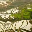 Rice terraces. Yunnan, China. — Stock Photo #42037473