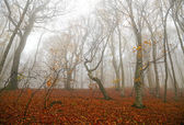 Mistige bos — Stockfoto