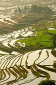 Rice terraces. Yunnan, China. — Stock Photo