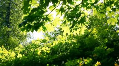 Sun breaking through green leaves. Shot with motorized slider — Stock Video