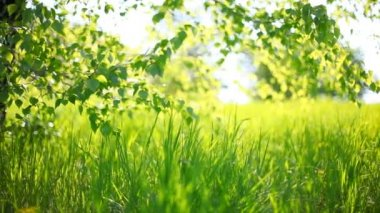 Summer park. Green grass, leaves and sunrays. Shot with motorized slider — Stok video