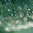 Water drops on fir tree — Stock Video #51063525