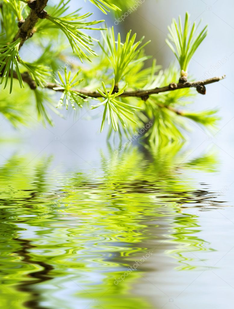 绿色的树叶,浅层焦点