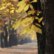 Autumn_1 — Stock Photo