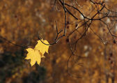 Autumn_3 — Stock Photo