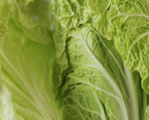 Green leaf of chinese cabbage background. — Stock Photo