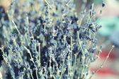 Dekoration torkade blommor — Stockfoto