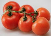 Branche de tomate bien mûre — Photo