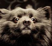 Black dog — Stock Photo