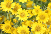 Bright sun and yellow flowers — Stock Photo
