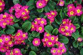 在花园里的花 — 图库照片