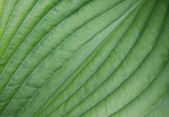 Leaves, close-up — Stock Photo