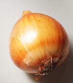 Onion on gray background. — Stock Photo