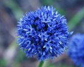 在花园里的蓝色花 — 图库照片