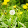 Dandelion — Stock Photo #40727451