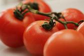 помидоры на ветке. — Стоковое фото
