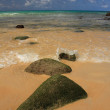 Stones on exotic, tropical, sandy beach — ストック写真