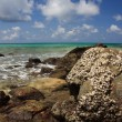 Stones on exotic, tropical, sandy beach — Stock fotografie #13690970