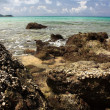 piedras en exótico, tropical, sandy beach — Foto de Stock