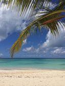 Tropical landscape — Foto de Stock